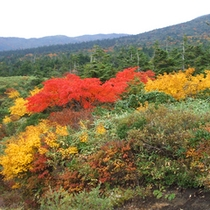 *秋の紅葉の様子。