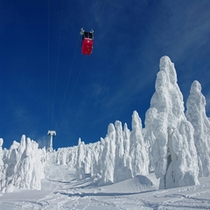 樹氷に囲まれながらスキーを楽しめます。