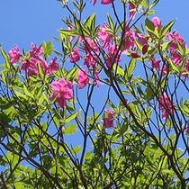 *森吉山/豊かな自然の中を散策(風景一例)/花々