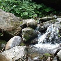 *周辺景色/川のせせらぎに癒されて