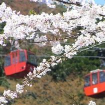桜とロープウエイ