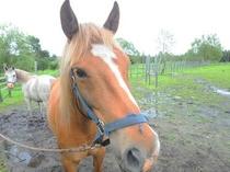 【牧場の馬】初心者も楽しめるウエスタン乗馬