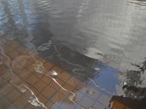 【温泉大浴場】モール温泉の特徴である湯色。当館は濃い湯色です。