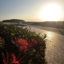 【青島・日の出】ホテルより徒歩15分、朝はお散歩や神社参拝者で賑わいます。