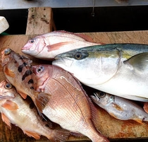 地魚 買い付けの一例