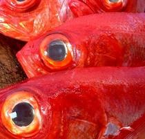 地物 金目鯛 水揚げの一例です