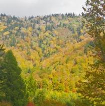 *尾瀬奥利根林道/秋になると美しい紅葉を望むことができます。