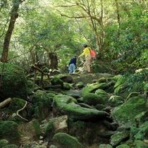 【苔むすの森】ジブリ映画『もののけ姫』でシシ神やコダマがいる森のモデルとされた森