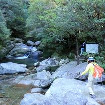 【白谷雲水峡】林野庁により選定された白谷川流域の自然休養林