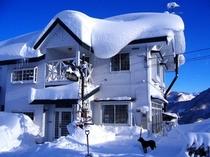 冬のシルバーファーン全景
