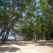 *【フタデウガン】管理棟の近くにある、干立の中心的な御嶽。周りには木が生い茂ったスペースがあります。