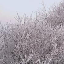 牧の戸峠の樹氷