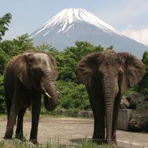 富士サファリパーク 象