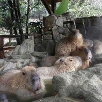かわいいカピパラや動物たちのショーが楽しめる人気のスポット