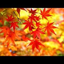 *季節の彩り「秋」