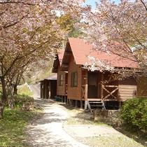 春にはきれいな桜が咲き乱れますよ♪