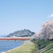 *【周辺】檜木内川堤の桜並木は、全長2kmにも及び、その光景は圧巻です。