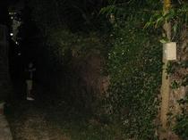 ホタルが飛び交うすーじぐゎー(小道)の夜の様子
