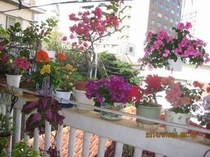お気にいりの花々