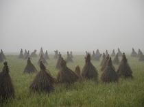 朝霧の田んぼ