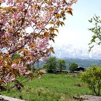 *【周辺風景】季節の花と、豊かな緑と、雪化粧した北アルプス