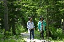 【アクティビティ】森林セラピー1