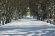 【癒しの森】森の雪道