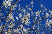 【周辺】オホーツクブルーの青空と樹氷