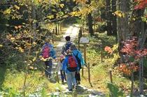 【森林セラピー】秋晴れの森を歩いて、自然のパワーを♪