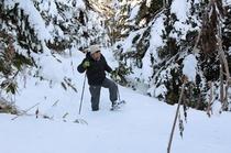 【冬の森】