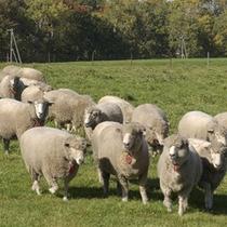 羊ヶ丘展望台の羊