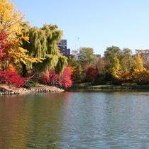 【秋】紅葉で赤黄に色づく中島公園