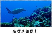 海ガメ発見!