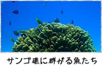 サンゴ礁に群がる魚たち