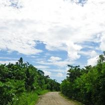 *【島内の風景】島内をのんびり散策。どこまでも広がる青空が、日常の喧騒を忘れさせてくれます。
