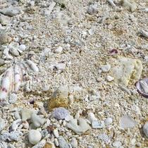 *【星砂の浜】小さな星形の砂が採れる事で有名な浜。星砂はとても小さいので、根気よく探してみて。