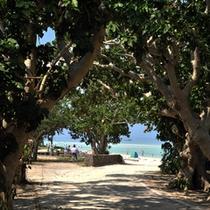*【コンドイビーチ】自転車で10分!生い茂る木々のトンネルを抜けた先に、白い砂浜が広がります。
