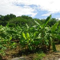 *【島内の風景】彩り鮮やかな南国の植物が、道行く人の目を楽しませてくれます。
