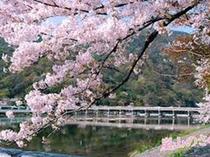 春にお出掛け下さい。嵐山 渡月橋と桜、当館より電車を利用して約30分~40分