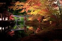 秋にお出掛け下さい。 庭園美しい高台寺 ライトアップ、当館より徒歩で約15分