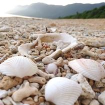 南風見田の浜と貝殻