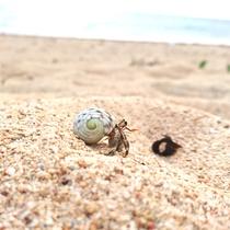 南風見田の浜とオカヤドカリ