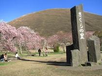 春の桜の里