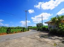【周辺景色】島人気分で散策ください