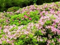 池泉式回遊式庭園<春>