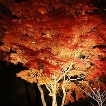紅葉回廊のライトアップ(イメージ)