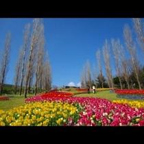 淡路島国営明石海峡公園★*゚*☆*゚**゚*☆*