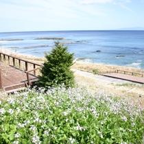 白浜中央ビーチ