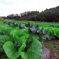 ときわ野では自家栽培の野菜をご提供致します。