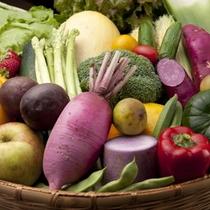 【地元産のお野菜】地元の農家さんが手間暇かけたお野菜たち